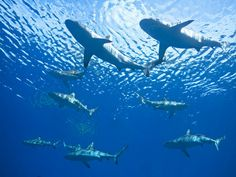 Hooray for Sharks! Groupon Adds Shark Products to Banned List