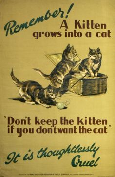 Remember a Kitten Grows into a Cat, 1920s - original vintage poster  Sad that that poster was necessary