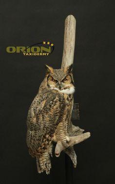 Wall hanging on Driftwood Taxidermy, Driftwood, Owl, Birds, Animals, Animales, Animaux, Owls, Bird