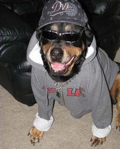 gangsta dog | gangster-dog-12
