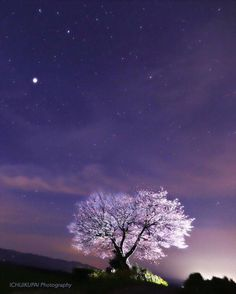 lifeisverybeautiful:Cherry Blossom,... http://plasticdrea.ms/post/142940008177/lifeisverybeautiful-cherry-blossom-kumamoto by https://j.mp/Tumbletail