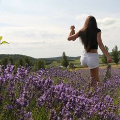 Trip on lavender field in Tihany (Balaton)