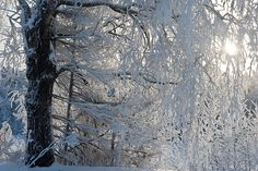 Digital photo collection about Estonian landscapes and species of Northern Europe Birch, Frost, Europe, Landscape, Abstract, Gallery, Winter, Artwork, Summary