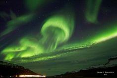 aurora jellyfish!