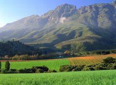 Stellenbosch South Africa Most beautiful vineyards I have ever seen. Places To Travel, Places To Visit, Travel Destinations, African Holidays, Garden Route, Out Of Africa, Africa Travel, Pretoria, Wine Country