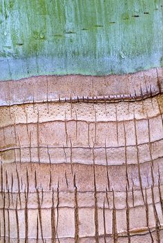 Palm Trunk by Janet Little Jeffers, via Flickr