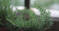 Wystarczy jeden głęboki wdech aromatu tego cudownego zioła! Herbs, Health, Plants, Foods, Fit, Mother Nature, Pillows, Food Food, Food Items