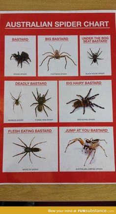 Funny pictures about Spider Chart. Oh, and cool pics about Spider Chart. Also, Spider Chart photos. Australian Spider, Australian Memes, Aussie Memes, Australian People, Black House Spider, Spiders In Australia, Australia Animals, Redback Spider, Funnel Web Spider