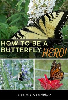 Do you want to help save the pollinators? Be a butterfly hero, here's how!