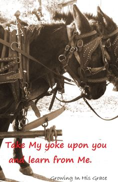 Matthew 11:29 Take My yoke upon you and learn from Me; for ...