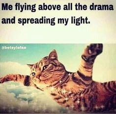 Spread the light, people! Funny Spiritual Memes, Spiritual Quotes, Spiritual Path, Spiritual Enlightenment, Spiritual Gangster, Spiritual Awakening, Tarot, Old Soul, Stupid Funny Memes