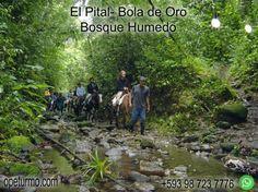 El Pital- Bola de Oro (Bosque Húmedo) Este tour consiste en un recorrido en el bosque en caballo, Este Bosque de garúa es el corazón del Parque Nacional Machalilla, su parte más alta llega a 800 msnm, siendo accesible por senderos de densa vegetación. Hogar de más de 100 especies endémicas, mamíferos e insectos, y se requiere de guía naturalista
