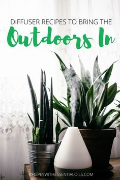 You can enjoy all the best smells of nature with these 7 Diffuser Recipes to Bring the Outdoors In. Take a walk on the beach, a hike through the forest, or enjoy the mountain air. Immerse yourself in nature with oils! Young Living Oils, Young Living Essential Oils, Esential Oils, Essential Oil Diffuser Blends, Diffuser Recipes, Scented Oils, Candle Making, Bring It On, Outdoors