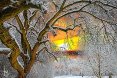 ~~~~ the golden hour ~~~