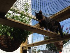 How to build a catio your cat will love Canadian Cat, Cat Friendly Plants, Outdoor Cat Enclosure, Reptile Enclosure, Cat Hotel, Cat Grass, Cat Run, Cat Activity, Cat Towers