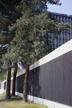 Pine trees, Paris, France, April 2015, Agata Byrne garden travels