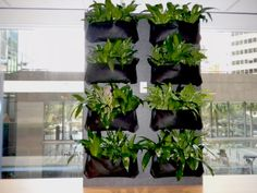 This vertical garden brings the outdoors in! See more ideas at www.greendesign.com.au