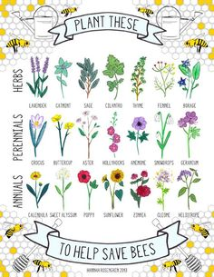 Looking for some gardening projects to do this weekend? Why not keep the bees in mind when planting? They need all the help they can get, and considering that 90% of our food and the trees that produce oxygen can't grow without bees, they need all the help we can get too  I found... Read More »