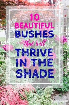 Seeking the best shrubs to plant in the shade? Try these! | From House to Home
