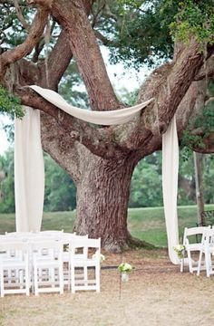 draping over a tree
