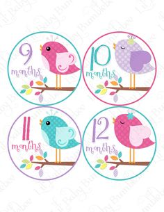 Monthly Baby Onesie Stickers - Alaina - Cute Whimsical Pastel Birds on a Colorful Branch - Great Baby Shower Gift and Photo Prop. $9.00 USD, via Etsy.