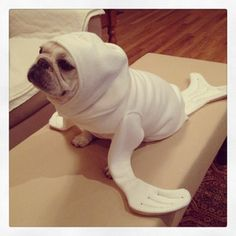 Seal pup, pug ! pet costumes
