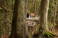 Woodland Tuba - Nikolaj Lund Classical Photos