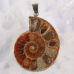 Ammonite Fossil Pendant by soyon on Etsy, $10.00