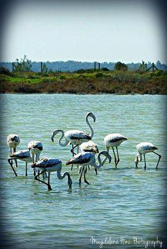 love cyprus Salt Lake Larnaca
