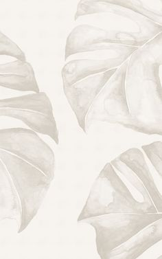 Our Panama wallpaper mural is a stylishly neutral take on tropical decor. If you're on the hunt for a botanical plant wallpaper that will fit beautifully into your minimalist interior, this design is one for your wishlist. The tonal cream colour palette of this monstera leaf mural is ideal for a Boho bedroom, Scandi kitchen, laid-back living room, or relaxed bathroom. The huge monstera leaves of the Panama wallpaper are hand-painted with a soft watercolour wash. Palm Leaf Wallpaper, World Map Wallpaper, Plant Wallpaper, Tropical Wallpaper, Forest Wallpaper, Beach Wallpaper, Kids Wallpaper, Flower Wallpaper, Estilo Tropical
