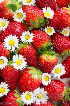 Jahody k jaru patří stejně jako sedmikrásky Strawberries and daisies Fruits Photos, Fresh Fruit, Beautiful Flowers, Strawberry, Creative, Strawberry Fruit, Strawberries, Strawberry Plant