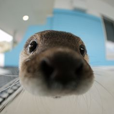 Otter has no sense of personal space