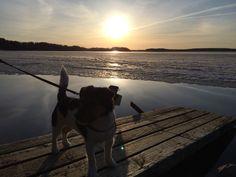 Telma ja Saimaa. Saimaa lake. Jackrusselterrier. Spring -15
