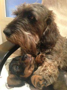 Cheto y Ringo.El perro de mi amiga Mar y su sobri.