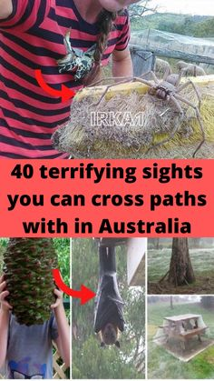 In a land where crocodiles snack on bull sharks in a roadside ditch, giant snakes eat devil bats for dessert, and pine cones the size of watermelons are always aiming for your head, you might want to reconsider crossing Oz off your bucket list.