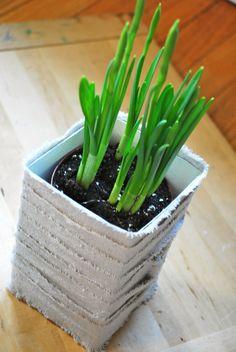 Milk carton with plant