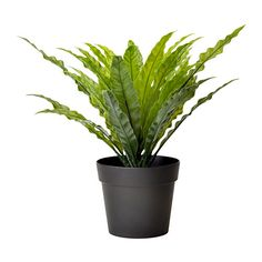 IKEA - FEJKA, Artificial potted plant, Lifelike artificial plant that remain just as fresh-looking year after year.Perfect if you can't have a live plant, but still want to enjoy the beauty of nature.