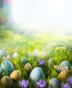 Printed Colorful Easter Eggs On The Grass In The Sunshine Backdrop For – Shopbackdrop Photography Studio Background, Photography Backdrops, Easter Peeps, Happy Easter, Easter Cake, Easter Backdrops, Easter Backgrounds, Easter Wallpaper, Scenery Wallpaper