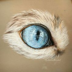 The final product of my newest time-lapse painting of a beautiful and fascinating cat eye! It belongs to @nala_cat  I hope I could make her a small joy with this!   #catlover #catsofinstagram #cateye #catdrawing #blueeyes #blue #polychromos #pastelpencils #pastel #timelapse #speedpaint #speeddrawing #drawing #catart #cats #catfur #eye #eyedrawing #eyeartwork #artwork #artist #200kart #carbothello #nala_cat #drawingoftheday #art4small #art_collective #artprocess #art_collective
