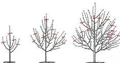 Cum si cand se curata pomii fructiferi? | Casa Si Design Bonsai, Vertical Garden Diy, Pergola, Outdoor, Design, Home Decor, Gardening, Agriculture, Plant