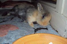 Votez pour Aki sur http://www.zoomalia.com/photomalia/photo/42-p344 #rabbit #lapin #zoomalia #photomalia #jeux #concours #sleep #dodo #animalerieenligne