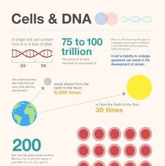 13 things you didn't know about cells & DNA