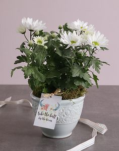 This St Patrick's Day, send your loved one something fresh and blooming beautiful like this gorgeous daisy plant. This plant also has an adorable and motivational tag, which makes it the perfect good luck gift for any occasion! Pink Happy Birthday, Happy Birthday Candles, Happy Birthday Balloons, Lucky To Have You, Owl Always Love You, Heart Balloons, Helium Balloons, 18 Candles, Elizabeth Arden Red Door