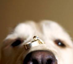 Yellow Labrador wedding dog ring bearer Toni Kami Wedding Hairstyles ♥ ❷ Wedding hairstyle wedding photography ideas