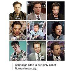 Sebastian Stan is Romanian me Sebastian Stan, Marvel Funny, Marvel Memes, Avengers Memes, Marvel Actors, Marvel Avengers, Marvel Comics, Loki, Bucky And Steve