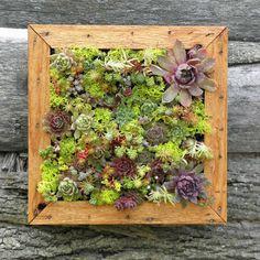 http://www.tuinieren.nl/tuinnieuws/zelf-maken/verticale-vetplanten.html