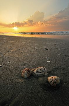 Myrtle beach sunrise by Chris coombes, via Flickr