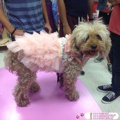 Rosa Kleid für Hochzeiten für Chihuahua und kleine Hunde #Hunde #Pudel - Rosa Kleid für Hochzeiten für kleine Hunde (Chihuahua, Zwergpudel, Pudel, Maltesisch,...) sehr chic, mit Spitzen auf dem Mieder und zerzauste Tüllrock