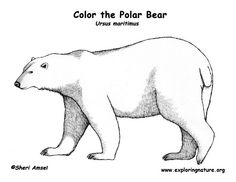 pin by muse printables on coloring pages at pinterest bear coloring pages. Black Bedroom Furniture Sets. Home Design Ideas