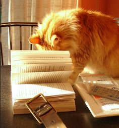 So good to know my felines aren't the only ones that do this. Reading a book on my own is a challenge around here :)